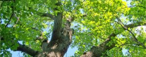 Mature tree representing growth for August 2018 grant funding competitions